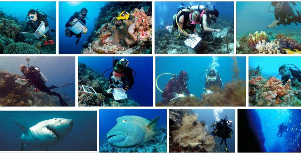 Study Marine Biology