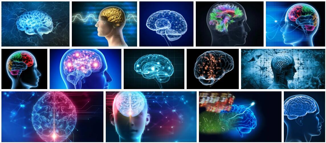Study Neuroscience