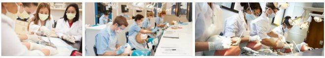 Study Dentistry in the Czech Republic